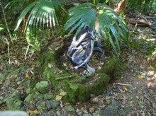 小笠原父島エコツアー情報    エコツーリズムの島        小笠原の旅情報と父島の自然-クワ