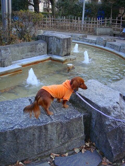 旅犬Lanileaのほほん風船記-有栖川公園