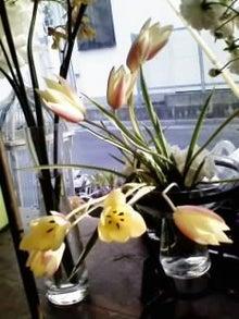 オカメインコのももちゃんと花教室と旅日記-画像0173.jpg