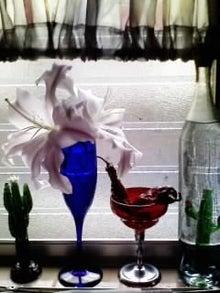 オカメインコのももちゃんと花教室と旅日記-画像0186.jpg