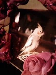 オカメインコのももちゃんと花教室と旅日記-画像0205.jpg