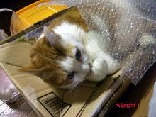 $ちびログ!-段ボール猫