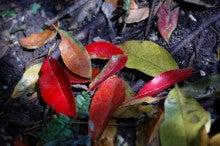 小笠原父島エコツアー情報    エコツーリズムの島        小笠原の旅情報と父島の自然-ホルト 葉