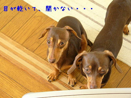 hamonics*ぷらす-1.30.2