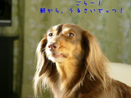 hamonics*ぷらす-nta1.30