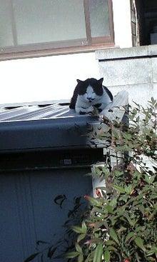 ずれずれブログ…湘南で猫と暮らせば…-100130_1141~0001.jpg