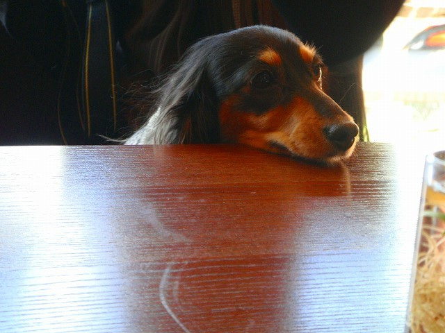 旅犬Lanileaのほほん風船記-スィーツデコ教室