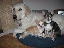 犬族とアメリカ生活