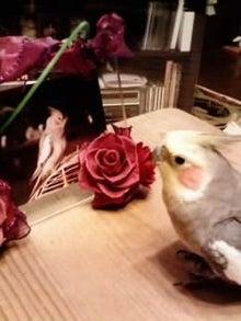 オカメインコのももちゃんと花教室と旅日記-画像0042.jpg