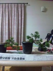 凡才人の盆栽日記-100131_1938~01.jpg