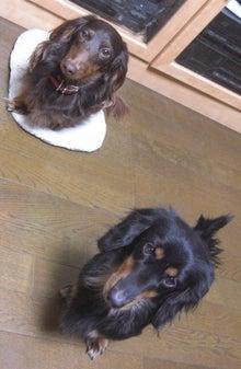 犬太郎が来た!-CIMG0063-0131.jpg