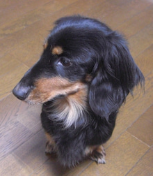 犬太郎が来た!-CIMG0064-0131.jpg