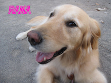 ラナママのひとりごと ~ ラナとライラと一緒♪♪