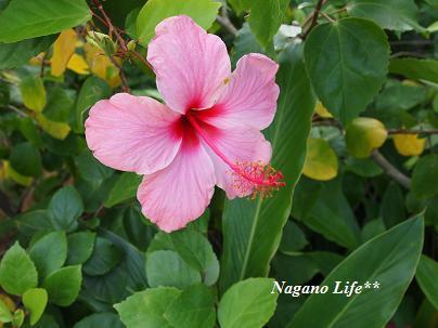 Nagano Life**-はな