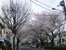 $メゾネット桜台(東京都 練馬区)-千川通りの桜並木
