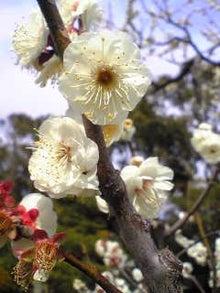 いおりブログ-Image1740.jpg