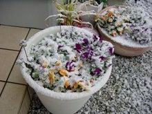 ひげろぐ-降雪1