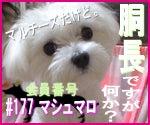 かわいい犬ステッカーあります♪ルンルンワンコ-t01500125_0150012510403550328.jpg