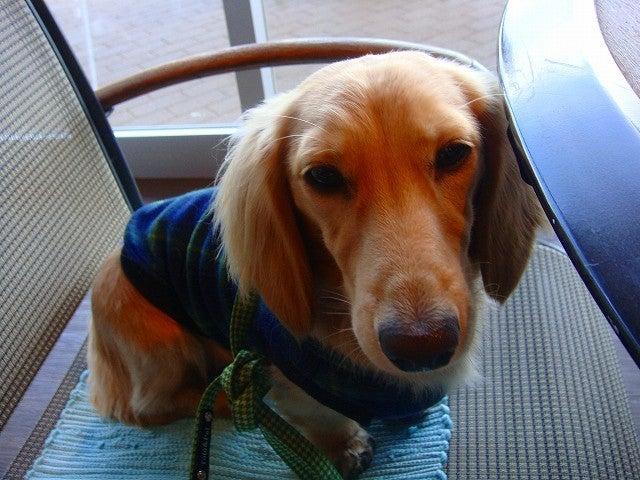 旅犬Lanileaのほほん風船記-Dog Garden cafe