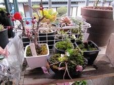 ベランダのLovers-盆栽コーナー