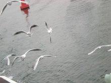 夫婦世界旅行-妻編-群れ飛ぶユリカモメ