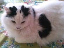 キャシー中島オフィシャルブログ「キャシーマムのパワフル日記」Powered by Ameba-100216_1142~010001.jpg