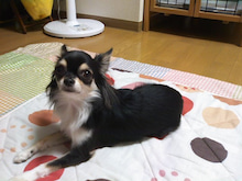 ポテころ東京生活[改]