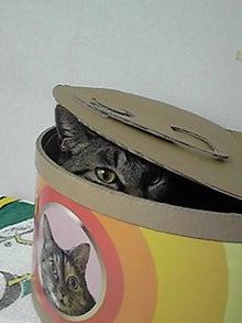 ずれずれブログ…湘南で猫と暮らせば…-100218_1840~01.JPG