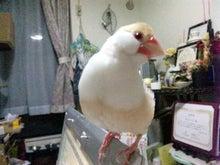 $ちびログ!-かぷ