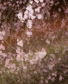 Break Through!-夜桜