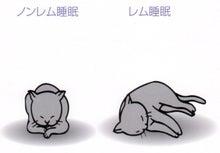 めざせ良質の睡眠 ~老舗ふとん屋が発信する快眠情報~-ネコの寝姿勢