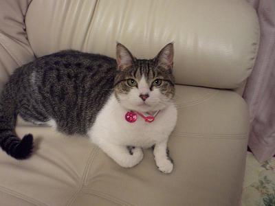 くぅちゃんだって猫である。
