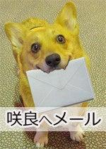 たぶんコーギー <Wコーギー☆咲良(さくら)>