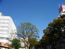 続 東京百景(BETA version)-#100 阿佐ヶ谷駅北口(11月のケヤキ)
