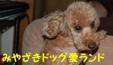 小さな命のリレー-ドッグ愛ランドバナー