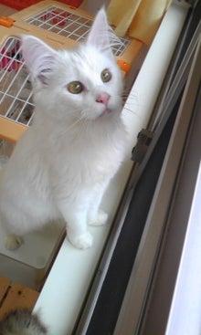 猫カフェ NYAON-Image996.jpg