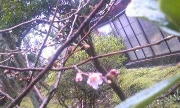 $☆志津のあれこれ☆-山桜