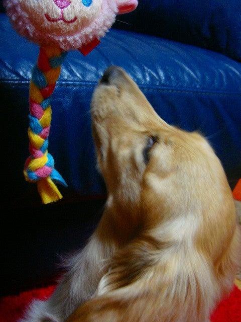 旅犬Lanileaのほほん風船記-kikiたんファミリーから