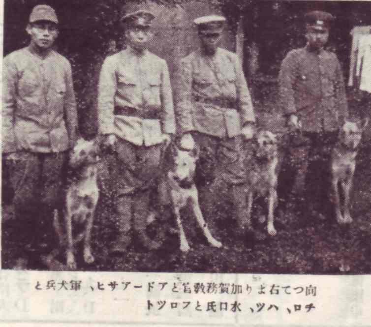 近衛野戦砲兵連隊軍用犬班 | 帝國ノ犬達
