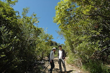小笠原エコツアー 父島エコツアー         小笠原の旅情報と小笠原の自然を紹介します-初寝山