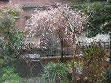 スローライフ日記 (癌との闘病日記はもうすぐ終わりにします)-雨が上がりました