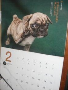 犬太郎が来た!-CIMG0005-0228.jpg