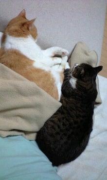 ずれずれブログ…湘南で猫と暮らせば…-100228_2315~0001.jpg