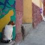 一挙公開!南米写真集…