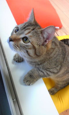 猫カフェ NYAON-Image1117.jpg