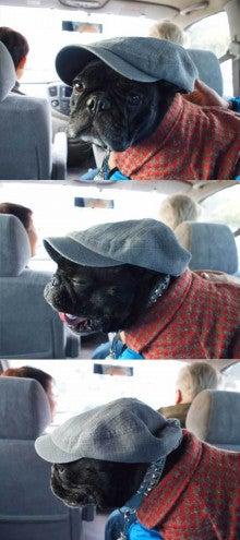あばれんぼうチャンクの日記-お正月の犬