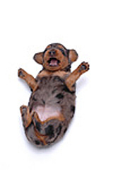 $物欲☆パラダイス-パンパン!