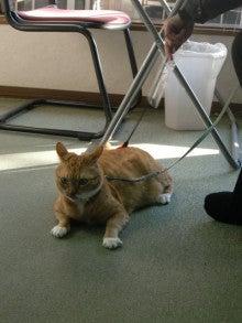 猫の*きゅうちゃん*のゆる~い写真とぶろぐ