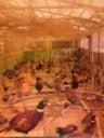 酒処肴屋のブログ-2010030919110001.jpg