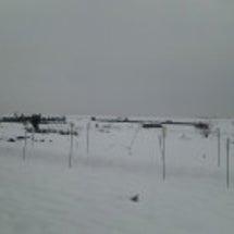 雪~~っっ!!